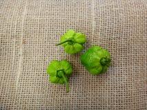 Chillis - зеленый цвет Стоковое Фото