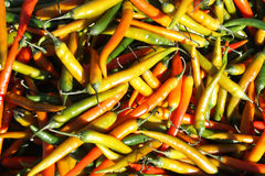Chillis Stock Images