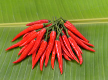 Chillis  on Banana leaf Stock Photography