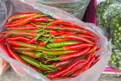 Chillis dla sprzedaży w Tajlandzkim rynku Fotografia Royalty Free