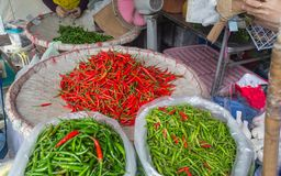 Chillis para a venda no mercado tailandês foto de stock royalty free