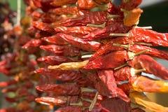 Chillis rojo secado Fotos de archivo