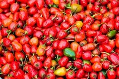 Chillis rotondi rossi Fotografia Stock Libera da Diritti