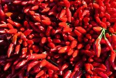 Chillis rouges Photo libre de droits