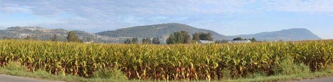 Chilliwack Corn Field Stock Photography