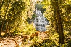 Chilliwack, KANADA - 14. Juli 2018: Leute im Brautschleier fallen provinzieller Park-Britisch-Columbia-Kanada-Sommertag stockbilder