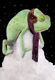 Chilly Chameleon. A veiled chameleon is sitting on a snow pile wearing a scarf and ear muffs Royalty Free Stock Image