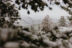 Beautiful Calm and Peaceful Frozen Cold Winter Season Snow in Breckenridge Colorado Landscape Scene of Fir Pine Trees in Outdoor N. Chilly Fresh Mountain Air in stock images