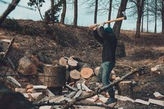 A chilly man harvests wood for cold winter cutting a thick solid ash tree stock image