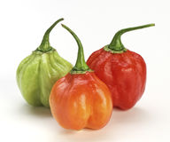 Chilly pepper background Stock Photos