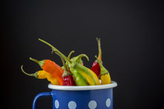 Chilly peppers in a blue pot Stock Photos
