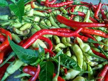 Chilly peppers. Green and red chilly Stock Photos