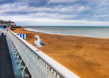 Chilly winter day on the main sands of Ramsgate beach as a seagull sits on white railings and preens itself under a cloudy moody. Sky royalty free stock photos