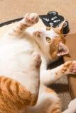Chilo en el café del gato Fotos de archivo libres de regalías