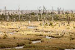 Chiloe Island National Park, Los Lagos Region, Chile. Chiloe Island National Park swamp land, Los Lagos Region, Chile stock photo