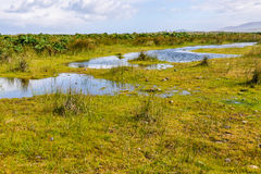 Chiloe National Park, Chile Royalty Free Stock Photography