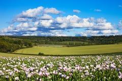 Chiltern Sommerlandschaft mit Mohnblumen Lizenzfreies Stockbild