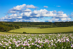 Chiltern summer landscape with poppies Royalty Free Stock Image