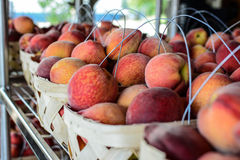 Chilton County peaches in baskets. Peaches on display in baskets in Chilton County, Alabama at a local farmers' market Royalty Free Stock Photography