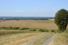 Chilton Down perto de Winchester inglaterra Imagem de Stock