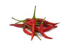 Chily rojo Imagen de archivo