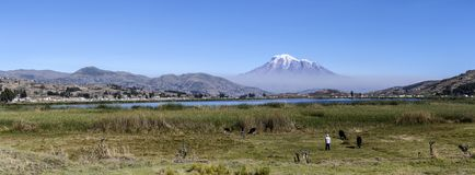 Chimborazo bergpanorama i Ecuador royaltyfri bild