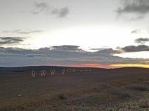 Chimborazo natural reserve. Wildlife sunset landscape Stock Photography