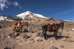 Free Chimborazo Volcano Royalty Free Stock Photography - 69956157