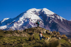 Chimborazo volcano and sheep Royalty Free Stock Images