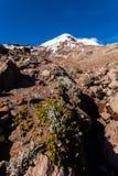 Chimborazo vulkan, Ecuador Arkivbild
