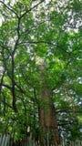 Chimenea grande de la cubierta del árbol de un molino de arroz abandonado viejo Foto de archivo