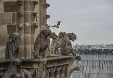 Chimera of the Cathedral of Notre Dame royalty free stock photo