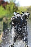 Chimera shaped fountain Stock Photography