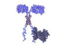 Chimeric antigen receptor CAR. 3d computer illustration of a chimeric antigen receptor. CARs are engineered cell receptors that allow T cells to recognize/attack Stock Photo