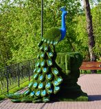 Chimki, Russia - 30 maggio 2017 scultura del pavone nella riva di Eco del parco Immagine Stock Libera da Diritti