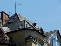 Chimney repair on high roof of classical old building stock image