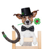 Chimney sweeper dog. Good luck chimney sweeper dog with hat and clover Stock Photography