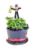 Chimney sweeper over green Oxalis, purple spots Royalty Free Stock Image