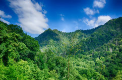 Chimney tops mountain in great smoky  mountains Stock Photo