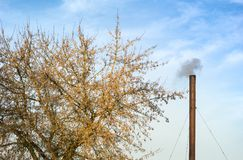 Chimney And Tree Stock Image