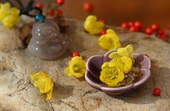 Chimonanthuspraecox och Buddha Royaltyfria Bilder