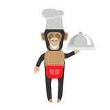 Chimp chef with dish Stock Images
