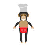 Chimp chef Royalty Free Stock Image