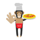 Chimp chef with pizza Royalty Free Stock Image