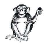 Chimp with a fruit. Hand drawn illustration of a chimpanzee sitting and holding a fruit in it's hand. Black and white graphics Royalty Free Stock Image