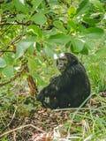 Chimp sitting on ground under tree stock image
