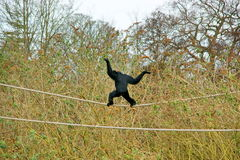 Mono en la cuerda. Fotos de archivo