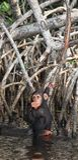chimpansee Royalty-vrije Stock Foto's
