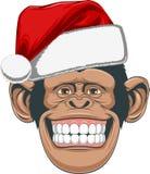 Chimpanzé principal em um tampão Imagens de Stock Royalty Free