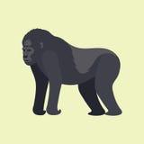 Chimpanzé sauvage de singe de zoo de vecteur de singe de Gorila de bande dessinée de macaque de nature de caractère animal rare d Photos libres de droits